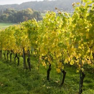 Vinho verde, Πορτογαλία