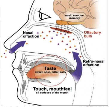 γευστική όσφρηση